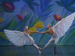 Two wings, one bird: The Great Russian Nutcracker's Dove of Peace in Chicago